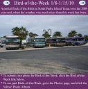 BirdofWeek2B0108102BSPI.jpg