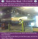 BirdofWeek2B0109092BMcMahan.jpg