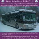 BirdofWeek2B0114112BHoltermann.jpg