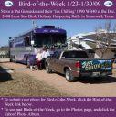 BirdofWeek2B0123092BGureasko.jpg
