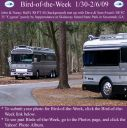 BirdofWeek2B0130092BHall2B25262BSwan.jpg