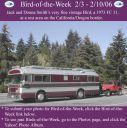 BirdofWeek2B0203062BSmith.jpg