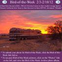 BirdofWeek2B0203122BCorpus.jpg