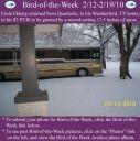 BirdofWeek2B0212102BEkberg.jpg