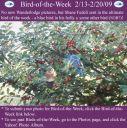 BirdofWeek2B0213092Bbuebird2Bin2Bholly.jpg