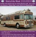 BirdofWeek2B0215132BJohnson.jpg