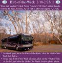 BirdofWeek2B0218112BArnold.jpg