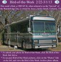 BirdofWeek2B0222132BSmall.jpg