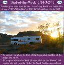 BirdofWeek2B0224122BSmith.jpg