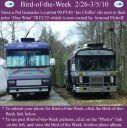 BirdofWeek2B0226102BGureasko.jpg