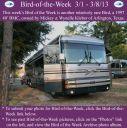 BirdofWeek2B0301132BKleber.jpg