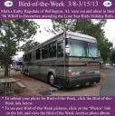 BirdofWeek2B0308132BRagsdale.jpg
