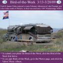 BirdofWeek2B0313092BHulse.jpg
