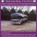 BirdofWeek2B0316122BFullenwider.jpg