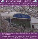 BirdofWeek2B0319102BFullenwider.jpg