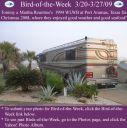 BirdofWeek2B0320092BRountree.jpg