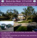 BirdofWeek2B0327092BLawrence.jpg