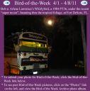 BirdofWeek2B0401112BLawrence.jpg