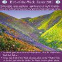 BirdofWeek2B0402102BEaster.jpg