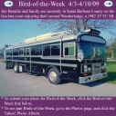 BirdofWeek2B0403092BBeraldo.jpg