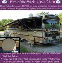 BirdofWeek2B0416102BLawrence.jpg