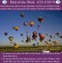 BirdofWeek2B0423102BNM2BHot2BAir2BBalloon2BRally~0.jpg