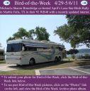 BirdofWeek2B0429112BBrundridge.jpg