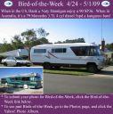 BirdofWeek2B0501092BHannigan.jpg