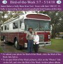 BirdofWeek2B0507102BBaber2B25262BBaze.jpg