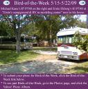 BirdofWeek2B0515092BEkberg2BKane.jpg