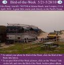 BirdofWeek2B0521102BArnold.jpg