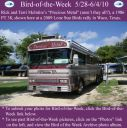 BirdofWeek2B0528102BMcIntire.jpg
