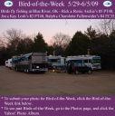 BirdofWeek2B0529092BArchie_2BLosh252C2BFullenwider.jpg