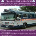 BirdofWeek2B0619092BEMS2BBird.jpg