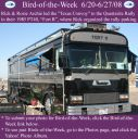 BirdofWeek2B0620082BArchie.jpg