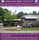 BirdofWeek2B0706122BRay2B25262BRountree.jpg
