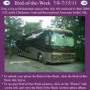 BirdofWeek2B0708112BHoltermann.jpg
