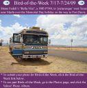 BirdofWeek2B0717092BFedeli.jpg