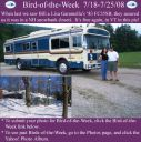 BirdofWeek2B0718082BGaramella.jpg