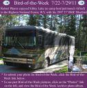 BirdofWeek2B0722112BPhares.jpg