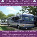 BirdofWeek2B0730102BBurt~0.jpg