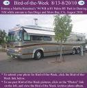 BirdofWeek2B0813102BRountree.jpg
