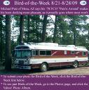 BirdofWeek2B0821092BPutz.jpg