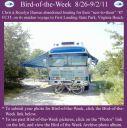 BirdofWeek2B0826112BDamen.jpg
