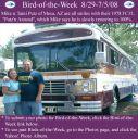 BirdofWeek2B0829082BPutz.jpg