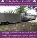 BirdofWeek2B0914122BEkberg.jpg