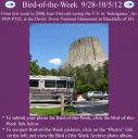 BirdofWeek2B0928122BHorvath.jpg