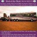 BirdofWeek2B1014112BArnold.jpg