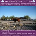 BirdofWeek2B1015102BHulse.jpg
