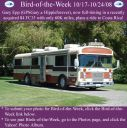 BirdofWeek2B1017082BEpp.jpg